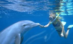 Discovery_cove_dolphin